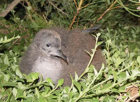 Animals Tasmania Membership