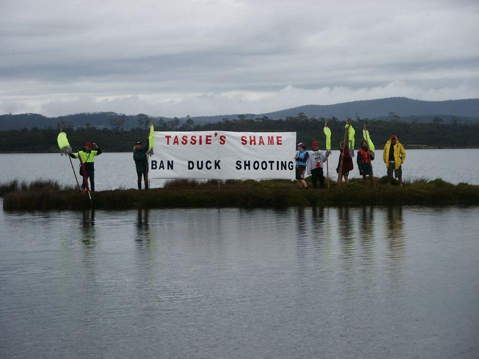 Tassie's Shame - Ban Duck Shooting