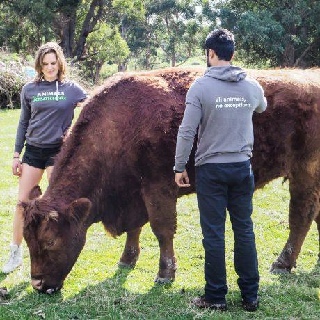 Photo courtesy of Brightside Farm Sanctuary