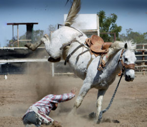 rodeo horse throwing rider